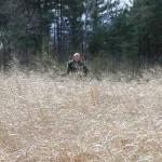Switchgrass (Gilford)