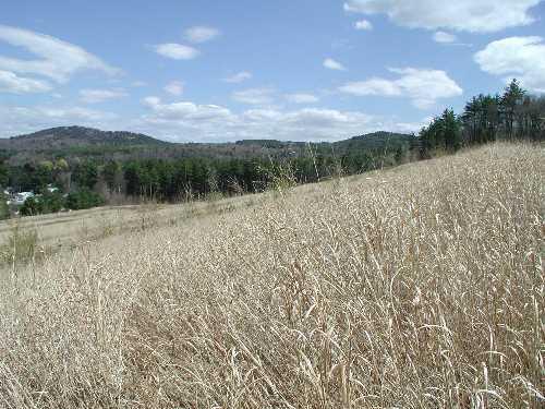 Warm season Grasses (Gilford)