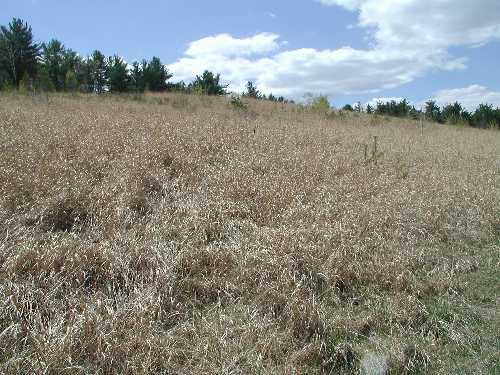 Reclaimed w/Warm Season Grass Mix (Gilford)