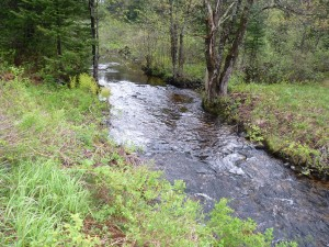 Photo of Dodge Brook which Bisects the Property