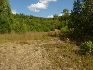 General Landscape